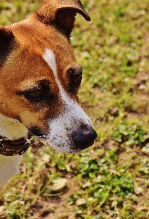 """El Perro """"Querido"""