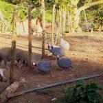 Alitas de pollo Piri-Piri al estilo de Nando's